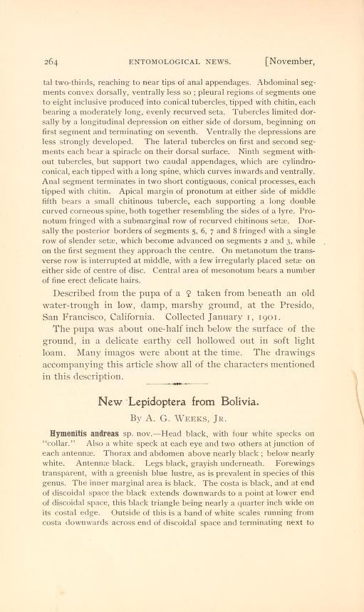 Weeks (1901), Entomol. news 12(9):264-267